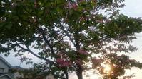 夕暮れの散歩 - 自分流 Happy Life