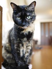 猫のお留守番 ワサビちゃん天ちゃん麦くん茶くん編。 - ゆきねこ猫家族