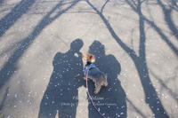 Cherry Blossom Ⅱ。 - Precious*恋するカメラ