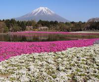 富士山ビュー。 - 気になるスイート