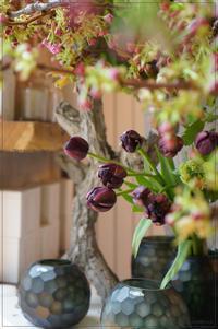 Tulipe noire - * Spice of My Life *