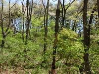 新緑と山桜 - 風路のこぶちさわ日記