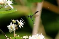 尻尾の長~い ハチ - 野山の住認たちⅡ