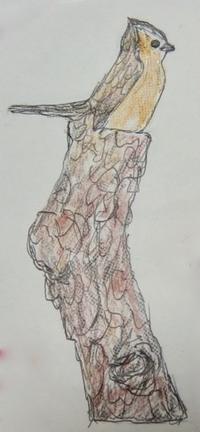 『#流木アート』 流木に再び生命の息吹きを【 Drift Art 】 - スケッチ感察ノート