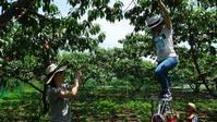 桃狩り食べ放題。SNS投稿タイムラインが映えるオススメの山梨県御坂町の農園農場 - 食べるものはなるべく自家栽培~裏の畑でプチ農業~