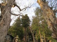 長野県佐久市の総社 新海三社神社にて☆☆☆ - 占い師 鈴木あろはのブログ