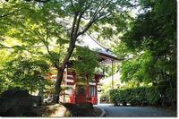 龍福寺の野藤(山藤) - そよ風になって~