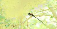 東方 ・・・・・・・ 鎮守の森 - みーすこるびじぇもんどりあん   -Mies Corbusier Mondrian-