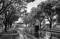 青葉通り - Photo-En ~ゆるりフォトライフ