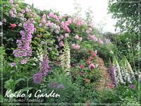 Koiko's Rose Garden Before Rain - 恋子のガーデニング日記