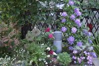 薔薇 オデュッセイア - 緑のチョーカー