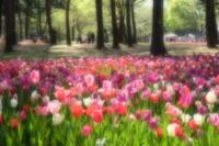 もうひとつの花園 - aya's photo