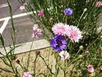 花 - NATURALLY