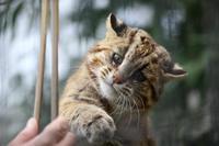 盛岡市動物公園 飼育係となかよしガイド - どうぶつたちと私