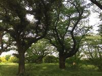 深緑。 - MakikoJoy 上北沢のアロマセラピールームあつあつ便り