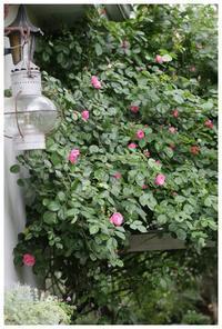 花のある暮らし - natu     * 素敵なナチュラルガーデンから~*     福岡でガーデンデザイン、庭造り、外構工事をしてます