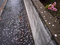 5月11日 今日の写真 - ainosatoブログ02