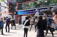 明洞で騎馬隊と遭遇 - マッシュとポテトの東京のんびり日記