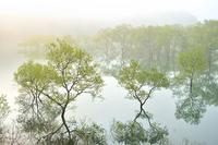 新緑の朝 - yama10フォトライフ