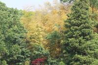 ホトトギスの鳴く里山 - TACOSの野鳥日記