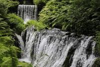 夏の思い出 - A primrose by the river's brim