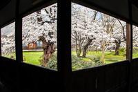 寺院回廊からの桜 - 日々是好日 Here comes the sun.