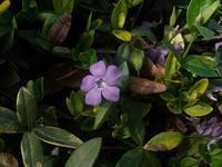 花があちらこちら - nshima.blog