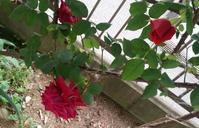小さき草花のまにまに 4 - 歌い手菅野千恵のaround me