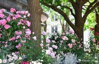 Garden Necklace YOKOHAMA 2017(7) - 今日の小さなシアワセ