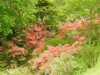 ツツジが満開のボタニカルガーデン - 花と写真と