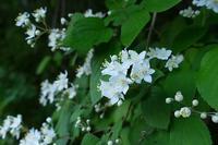 5年ぶりに野の花の宝庫、九鬼山に その3 - 季節(いま)を求めて