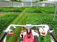 草刈り第2弾 - 葡萄と田舎時間