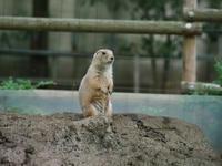 上野動物園 - Taro's Photo