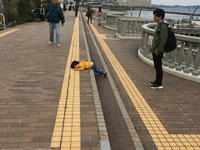熱海・修善寺温泉旅行 ① - 猫とまた旅