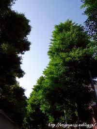 緑と花散歩と春の食卓満喫中 - 丁寧な生活をゆっくりと2