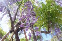 花に迫られた日 - 気ままにお散歩