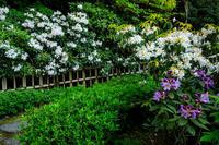 花咲く西南院(當麻寺塔頭) - 花景色-K.W.C. PhotoBlog