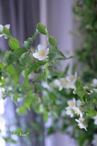 体験レッスンにご参加ありがとうございました♩ - Le vase*  diary 横浜元町の花教室