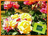 「元氣でいてね❗」5月14日(日)「母の日」の贈り物🎵 - グリーンノート マクロビカフェ&土の音(オカリナ工房)
