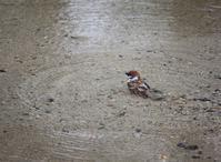 今日の鳥さん 170512 - 万願寺通信