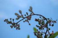 撮り逃しかけた花たち - 彩りの軌跡