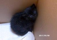 新しい子猫が増えました(5月8日) - クロと六にゃんずたち