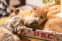 今日もイッちゃん - 猫と夕焼け