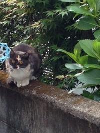 早朝の猫だまり - 愛犬家の猫日記