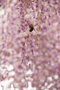 藤の花/優しい色合いの花壇/名前のわからない花/クリーピングタイムと・・・。 - DOUBLE RAINBOW