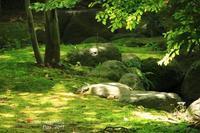 緑眩し - ある日の足跡