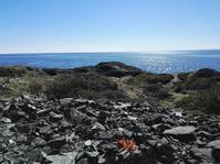 海沿いのバーベキュー♪ - のんびりノルウェー暮らし♪