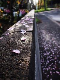 5月12日 今日の写真 - ainosatoブログ02