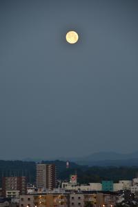 月にはじまり月に終わる日(^o^) - 犬連れへんろ*二人と一匹のはなし*