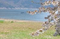 今年も海津大崎の桜を見るために♪ - a&kashの時間。